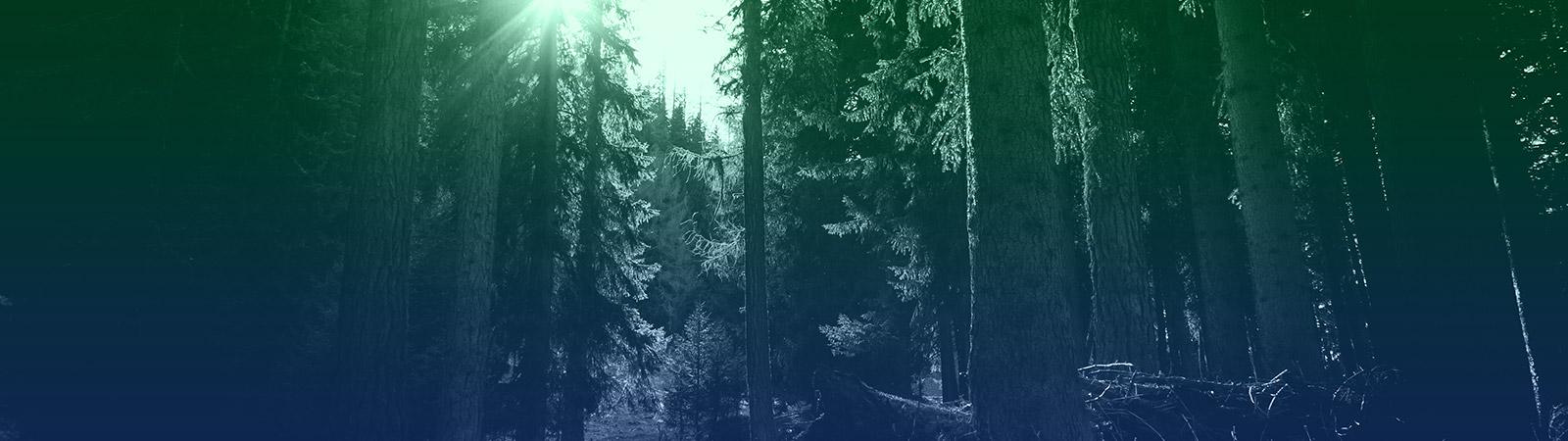 header_silvic